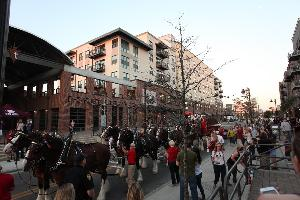 Clydesdales visit College Town in Tallahassee, Florida